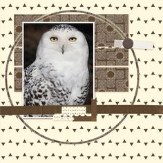Owls #3 layout by Tina Shaw | Pixel Scrapper digital scrapbooking