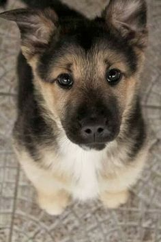 sweet baby! Top 5 Smartest Dogs you should know, click the pic to know