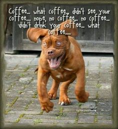 #French #Mastiff and Coffee