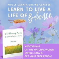 """""""Meditations On The Natural World."""" A creative, easy and user-friendly course to get you started on a fulfilling #meditation practice. Get your half-price introductory offer [limited time only]  ENROLL NOW! http://mollylarkinonline.teachable.com/p/meditationsonthenaturalworld"""
