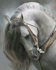 Andalusian horse- Spain has some of the most beautiful horses in the world and has been greatly responsible for improving the stock of several horse breeds worldwide. All The Pretty Horses, Beautiful Horses, Animals Beautiful, Cute Animals, Beautiful Yoga, Wild Animals, Baby Animals, Andalusian Horse, Majestic Horse