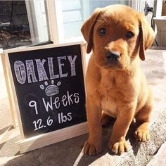A sign will be created showcasing the age and weight of the puppy of honor at the party.