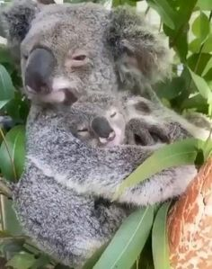 Cute Little Animals, Cute Funny Animals, Cute Animal Videos, Animals Beautiful, Pet Birds, Animals And Pets, Wild Animals, Animal Pictures, Cute Babies