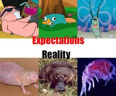 expectations vs. reality, the real ones r disgusting...*baby barf*