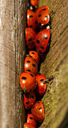 ladybug-Christ was to identify Himself with the interest and needs of humanity.