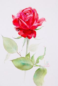 129 Best Watercolor Without Drawing Quot Rose Quot By Lafe Images