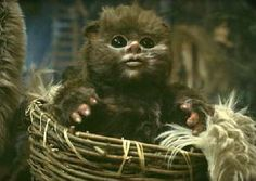 Ewok baby - because they're awesome, that's why :D
