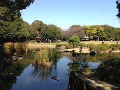Autumn in Gyoda Park, Nishi Funabashi