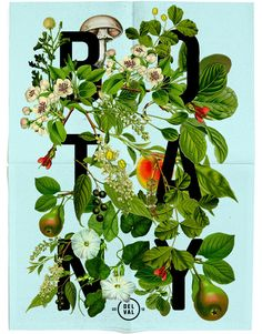 """DelVal Botany Poster by Dan Blackman - """"Collage from old Botany Illustrations found at the Philadelphia Museum of Science."""""""