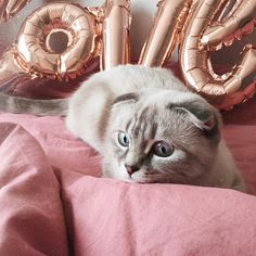 #cat #cats #catsofinstagram #ilovemycat #kittensofinstagram #meow #bestmeow #meowagram #meow_beauties #topcatphoto #kitty #kittylookbook #exellent_cats #cats_of_world #cat_features #elegant_cats #sleep #sleepcat #maisoncat #carriecat #maisonandcarrie Cats Of Instagram, Carry On, Kitten, Carrie, Sleep, Animals, Elegant, Cat Breeds, Kittens