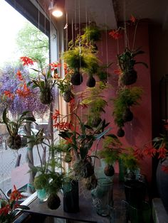 A string garden display graces a shop window. Amazing what you can do to expand the use of hanging String gardens... indoors and outdoors.