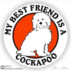My best FRIENDS are Cockapoo =)