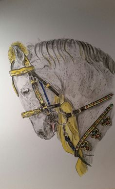 Pakistan fair horse Watercolour pencils, 30x42 cm on Clairefontaine 250 g/m² paper Photo by Muhammad Saeed Rao, thank you so very much for this wonderful photo.