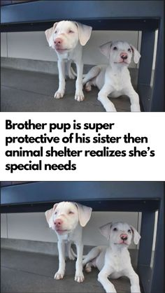 The duo couldn't be separated then rescuers realized why. The duo couldn't be separated then rescuers realized why. Animal Jokes, Funny Animal Memes, Cute Funny Animals, Cute Baby Animals, Funny Cats, Funny Memes, Happy Animals, Animals And Pets, Cute Puppies