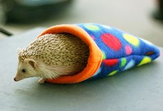 """The baby hedgehog should also be fed with good milk substitute like """"Vitapet"""" lactose free pet milk which is usually available in the supermarket. You should never give your hoglets cow's milk."""