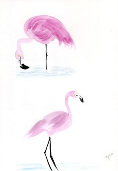Flamingo sketches