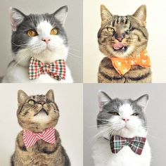 'Tis the season to add a festive touch to your cat's wardrobe! Just in time for the holidays, Germany-based brand, Cat in Berlin has launched their Catmas collection, filled with purrific pet accessories, including bow ties of candy cane and Scandinavian Cat Bow Tie, Bow Ties, Cat Dressed Up, Cat Dresses, Reborn, Pet Fashion, Cat Accessories, Cat Costumes, Cat Collars