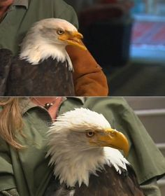 Eagle gets a new Beak created by Printer - Impression 3d, 3d Printer Designs, Design Fields, Weird Science, 3d Prints, Cool Tech, Science And Technology, Printing Services, Pet Birds