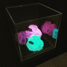 Art in a box. Venice, Cube, Contemporary Art, Colour, Studio, Box, Color, Snare Drum, Venice Italy