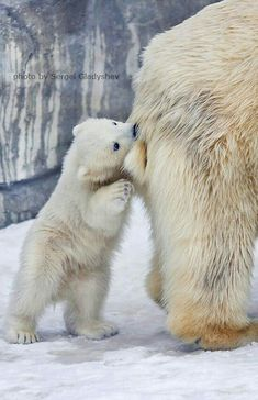 A Chew On Moms Tail!