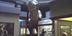 Durban's Natural Science Museum Durban South Africa, Visit South Africa, Natural Science Museum, Science And Nature, Science And Nature Books
