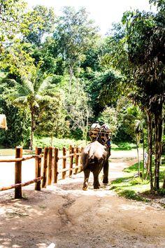 Elefanten in Thailand | Thai Elephant Conservation Center, Lampang. - Kaschula