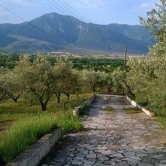 Eliris olive grove. Greece, Sidewalk, Country Roads, Greece Country, Side Walkway, Walkway, Walkways, Pavement