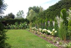 Moja codzienność - ogród Oli - strona 947 - Forum ogrodnicze - Ogrodowisko