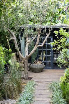 Small Outdoor Spaces, Outdoor Areas, Outdoor Rooms, Abigail Ahern, Back Gardens, Small Gardens, Garden Inspiration, Garden Ideas, Landscape Design