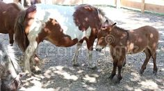 Video about Pony with cubs playpen in the shade. Video of animal, clip, horse - 77397738 Playpen, Cubs, Pony, Royalty Free Stock Photos, Horses, Animals, Pony Horse, Animales, Bear Cubs