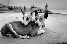 Fotograf M. Vanden Eeckhoudt: Tiere posieren nicht – Seite 6 | Reisen | ZEIT ONLINE