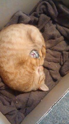 愛があふれてる 赤子を「全身で包み込むネコ」が可愛すぎてマジ悶える(;´Д`):ぁゃιぃ(*゚ー゚)NEWS 2nd