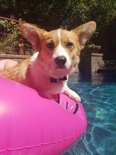Pool Time Cool Time
