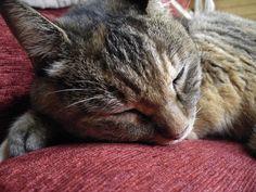 sleeping Davinci