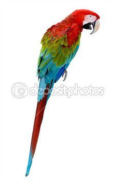 kolorowe papugi Ara na białym tle — Obraz stockowy #35950651