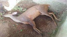 """""""O Grito do Bicho"""": Morte de animais silvestres causada por cães chama..."""