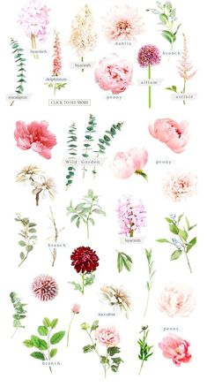 Watercolor Botanical set by TL Design on Creative Market . - Watercolor Botanical set by TL Design on Creative Market Waterco - Deco Floral, Arte Floral, Floral Design, Design Set, Logo Design, Flowers Wallpaper, Wallpaper Art, Flower Names, Watercolor Flowers