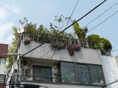 Urban Farming Takes Root in Tokyo