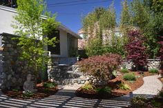 Landscape design with Japanese maples Building Design, Building A House, Construction Group, Japanese Maple, Landscape Design, New Homes, Plants, Outdoor, Courtyards