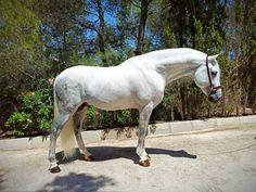 Pura raza español en venta Horses, Animals, Horses For Sale, Equestrian, Animales, Animaux, Horse, Words, Animal
