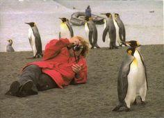 Google Image Result for http://tackytouristphotos.com/wp-content/uploads/2012/03/Penguin_and_Christy-Antarctica-Tacky-Tourist-Photos.jpg