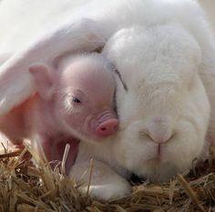 This little piggy hid under my ear. - Imgur