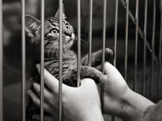 Adoptions Up, Euthanasia Down at Shelters in March (19 Apr 2012). This is GREAT news! Kudos to everyone who's ever done anything to help change this dynamic; keep up the good work!!