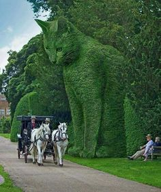 The Topiary Cat