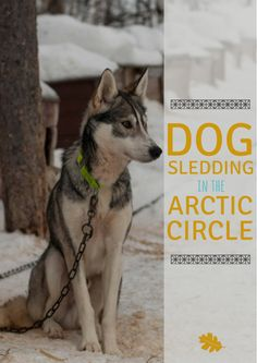Bucket List: Dog Sledding in the Arctic Circle — Submerged Oaks