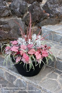 Coral Bells make wonderfully colorful additions in planters! #containers, #pottery, #pots, #planters