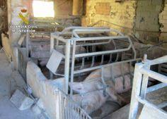 Denuncian por segunda vez al dueño de una granja porcina de Calasparra con…