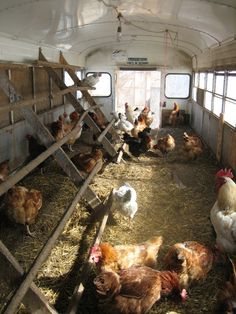 "I'm sorry if I offend anybody who actually used an old bus to make a chicken coop, but I thought this was hilarious!  So....@Kim Emery there is no excuse for you not having the chickens now, as you would be saving the environment by picking up an old bus that is ""yard art"" along the dusty roads of Arkansas!  :)"