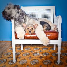 Adorable post on pets on furniture :)