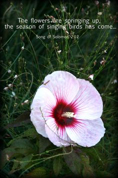 Pearls of Wisdom Spring Card Song of Solomon 2:12